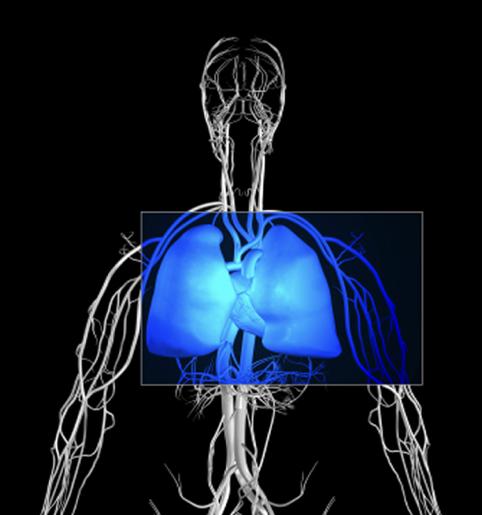 Principios básicos de Pilates: La respiración