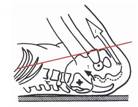 Principios básicos de Pilates(II). Estabilidad lumbopélvica.
